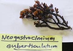 Seaweed-2019-311