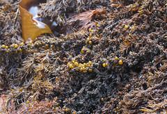 Seaweed-2019-233