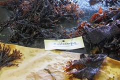 Seaweed-2019-187