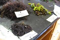 Seaweed-2019-168