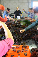 Seaweed-2019-161