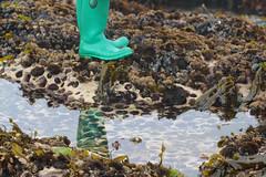 Seaweed-2019-116