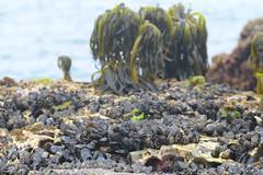 Seaweed-2019-102
