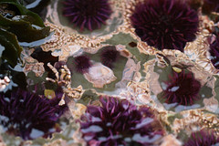 Seaweed-2019-69