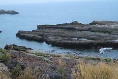 Seaweed-2019-39