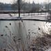 2010.12.28. Évvégi fagyos képek a Kórógy-tavon - Fotók:PURGEL ZOLTÁN©