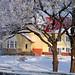 2012.02.08. Szentes hóban-fagyban - Fotók:PURGEL ZOLTÁN©