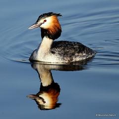 1 - Divers > Cormorants