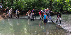 Crossing a river along the Harpy Eagle trail - Darien - Panama_134442212_iOS