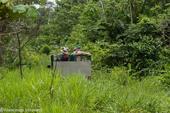 In the forest  with 4x4 car -  Darien - Panama