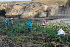 Seaweed-2019-370