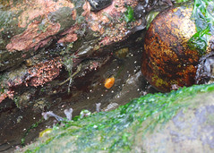Seaweed-2019-363