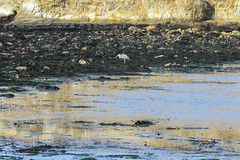 Seaweed-2019-367