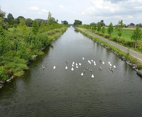 Saint-Léger, le canal de l'Espierres en2019 (3)