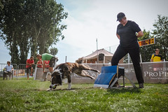 Flyball - first time