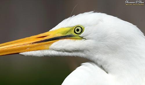 A bird's eye shot
