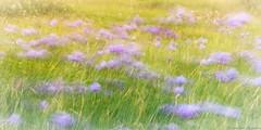 Filé, le, vent les fleurs