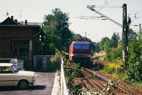 Lichtentanne(Sachs)