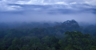 Amazon Rainforest_clouds