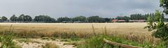 Crop,   De Zuidplaat - Dordrecht
