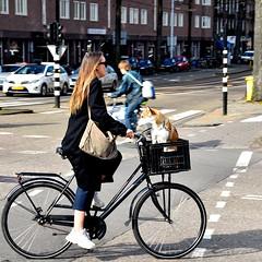De hond uitlaten - Hobbemakade Amsterdam