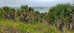 Fort DeSoto- Pinellas County FL (10)