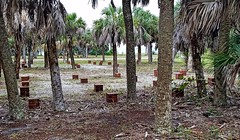Fort DeSoto- Pinellas County FL (13)