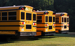 school buses waiting