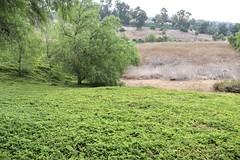 Irrigation - No Irrigation