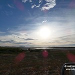 Aves en la laguna larga de Villacañas (Toledo) 7-8-2019