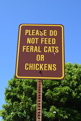 Don't feed the cats or chickens - Spouting Horn