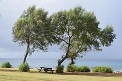 Poipu Beach and Beach Park