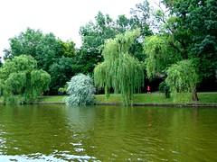pe lacul herăstrău