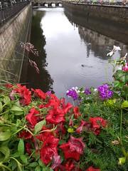 A fleurs d'eau...