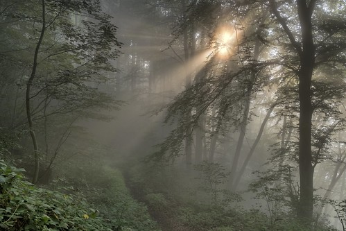 *morning sun in the cloud forest*
