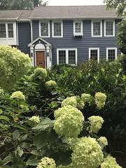 Local garden goodness