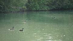 2019 August Netherton Reservoir