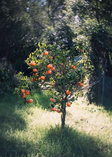 Vic's Oranges
