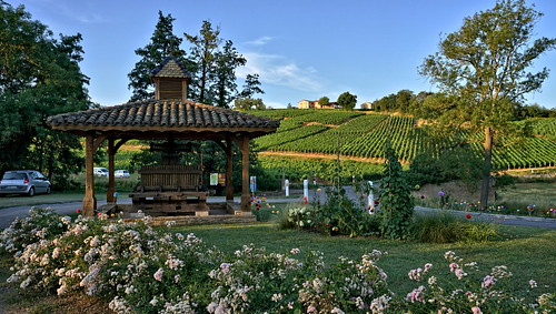 Vineyard country