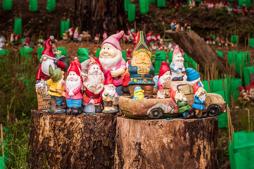 Gnomesville at Wellington Mills near Collie in Western Australia is a chaotic collection of quirky little people that have exploded into a thriving community that has survived and prospered, despite human and natural intervention.