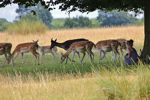 The Deer Watcher