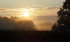 sunlight thru fog