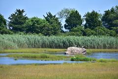 Hammonasset Natural Area Preserve