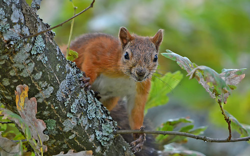 Do you have some nuts, dear, or only camera?