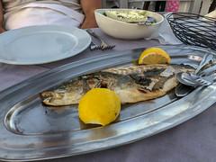 Mediterranes Mittagessen mit ganzem Fisch und Zitronenhälften, auf einem ovalen Teller im griechischen Restaurant Tarsanas auf Spetses