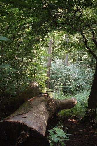 Summer forest III