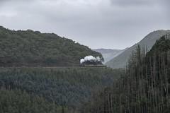 Vale of Rheidol Railway: approaching Devils Bridge