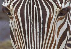 Close Up Stripes