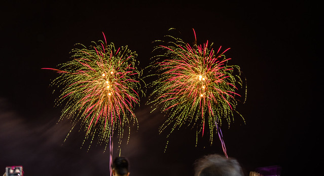 Fireworks-Sparkling Lion Palm
