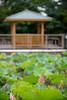 Photo:20190713 Hoshina pond 2 By BONGURI